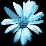 fringe sembol çiçek