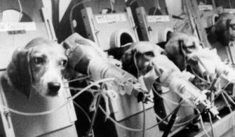 Animal-testing_provided_public-domain-724x476
