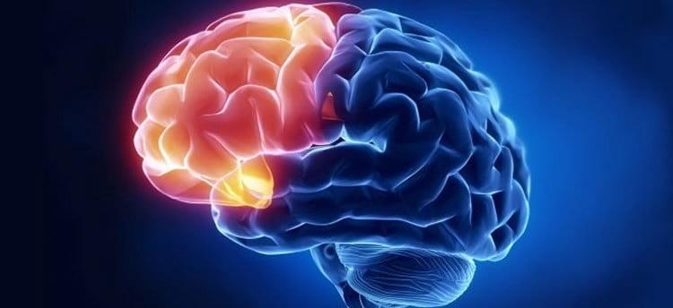 Prefrontal Korteks Nedir? Ne İşe Yarar?