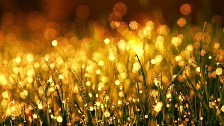 Yağmur damlaları, kelimelerini yükselt sesini değil, yağmurdur çiçekleri büyüten, gök gürültüsü değil.
