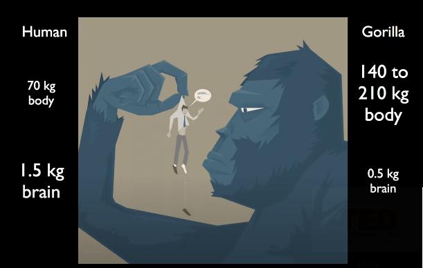 İnsan ve Gorilin vücut kütlesi ve beyin kütlesi bakımından karşılaştırılması