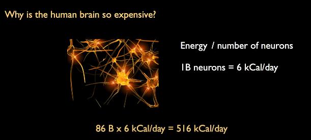 Beynimizin Günlük kaç kaloriye ihtiyacı olduğunun hesaplaması.