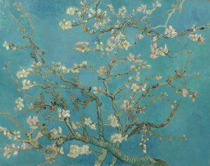Almond Blossom Badem Çiçekleri